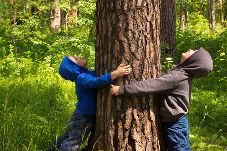 Photo pour Children (boys, hands) hugging pine, playing and having fun outdoor in summer forest (park). Environmental protection concept. - image libre de droit