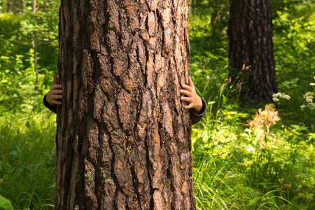 Photo pour Child (boy, hands) hugging pine, hiding, playing and having fun outdoor in summer forest (park). Environmental protection concept. - image libre de droit