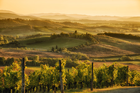 Photo pour A panoramic view over the hills of Chianti at sunset hour - image libre de droit