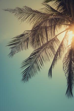 Photo pour Top of palm tree with sun behind, toned - image libre de droit