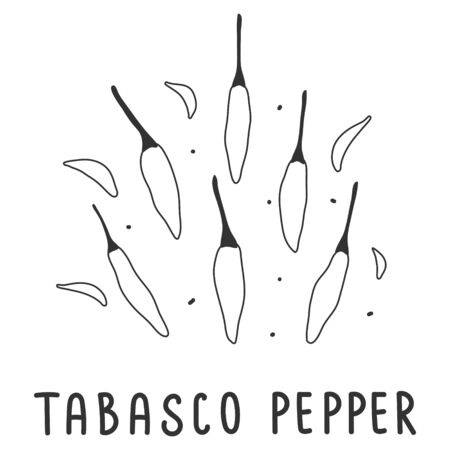 hand drawn vector illustration of various kinds of pepper vegetable. Simple linear handdrawn drawing of tabasco hot pepper sort. Cooking ingredient isolated element in sketch style.