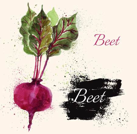 Beautiful hand painted illustration with beet in watercolor technique.