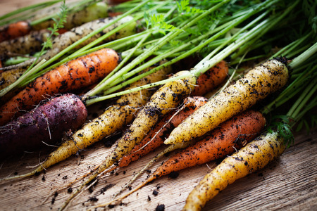 Photo pour Fresh rainbow carrots picked from the garden - image libre de droit