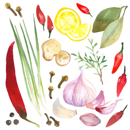 Photo for Watercolor set of herbs and spices drawn by hand on a white background. - Royalty Free Image