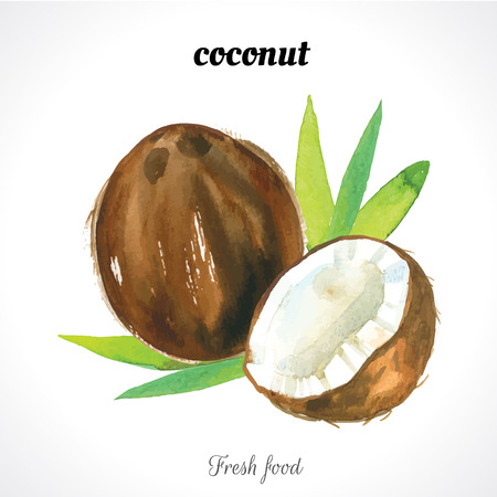 Illustration for Watercolor coconut. Nuts. Watercolor illustrations of organic food. Fresh exotic food. - Royalty Free Image