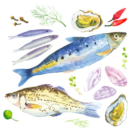 Illustration pour Watercolor set with fish, seafood, oysters,sardina, basil and other herbs and spices. Hand-drawn on a white background. - image libre de droit