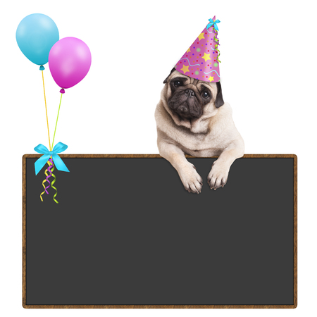 Photo for adorable pug puppy dog hanging with paws on blank sign with balloons and wearing pink party hat, on white background - Royalty Free Image