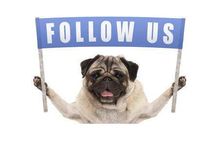 Photo pour pug puppy dog holding up blue banner with text follow us for social media, isolated on white background - image libre de droit
