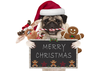Photo for cute Christmas pug dog with santa hat and candy cane, toys and cookies, holding up blackboard, isolated on white background - Royalty Free Image
