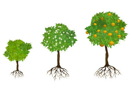 Illustration pour growing trees with roots. vector illustration - image libre de droit