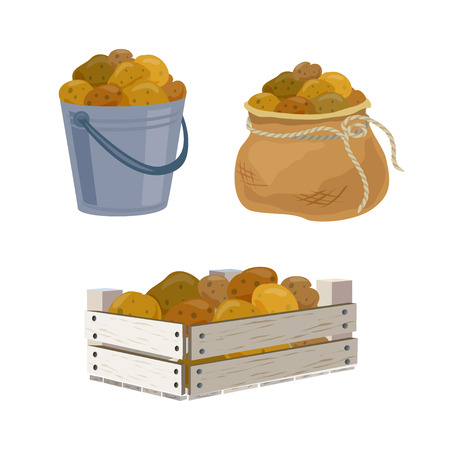 Illustration for potato harvest in different containers. vector illustration - Royalty Free Image