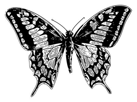 Illustration for Old engraved illustration of a old world swallowtail or papilio machaon, isolated on white. Live traced. From the Trousset encyclopedia, Paris 1886 - 1891. - Royalty Free Image