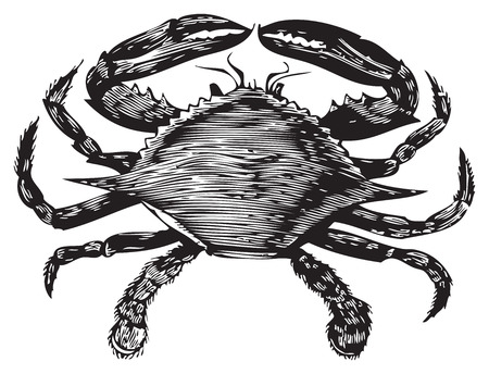 Illustration for Old engraving from Trousset Encyclopedia of a blue crab, black and white, vectorized using live trace. - Royalty Free Image