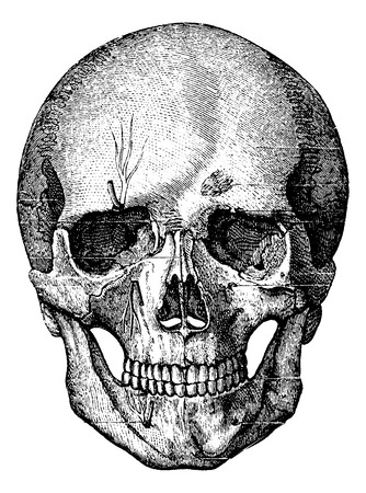 Illustration pour Bony skeleton of the face and the anterior part of the skull, vintage engraved illustration. Usual Medicine Dictionary - Paul Labarthe - 1885. - image libre de droit