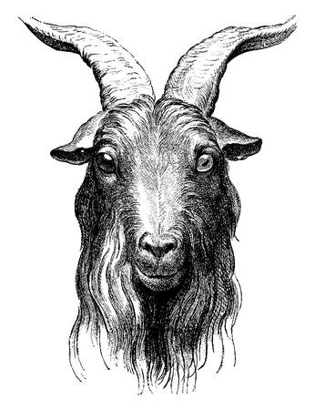 Illustration for Goat, vintage engraved illustration. Earth before man – 1886. - Royalty Free Image