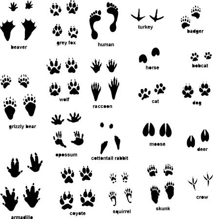 Various animal tracks
