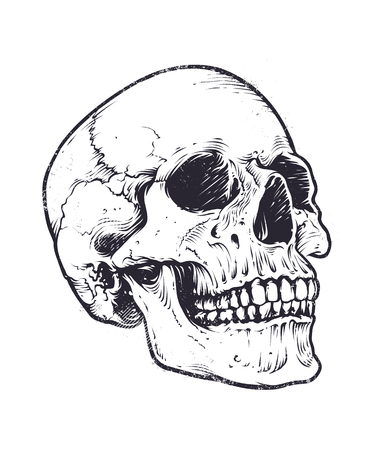 Illustration pour Anatomic Skull Vector Art. Detailed hand-drawn illustration of skull. Grunge weathered illustration. - image libre de droit