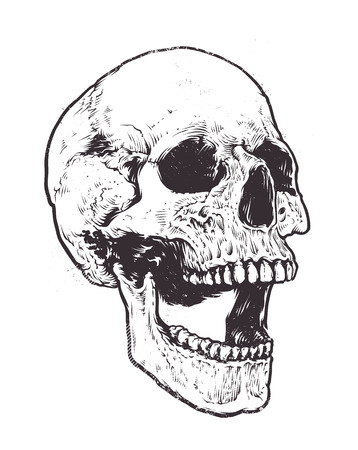 Illustration pour Anatomic Skull Vector Art. Detailed hand-drawn illustration of skull with open mouth. Grunge weathered illustration. - image libre de droit