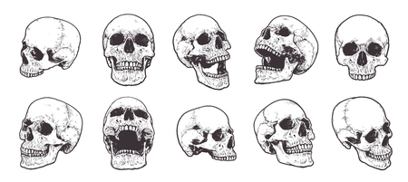 Illustrazione per Hand-drawn Anatomical Skulls Vector Set. - Immagini Royalty Free