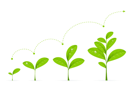 Ilustración de Phases Green Plant Growing. Concept Development Vector illustration - Imagen libre de derechos