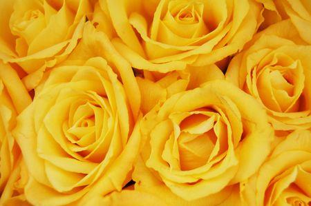 Foto de Yellow roses - Imagen libre de derechos