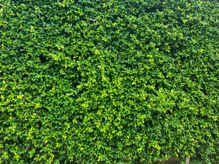 Foto de texture of nature tree wall background texture - Imagen libre de derechos
