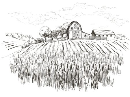 Illustration for Rural landscape field wheat. Hand drawn vector Countryside landscape engraving style illustration. - Royalty Free Image
