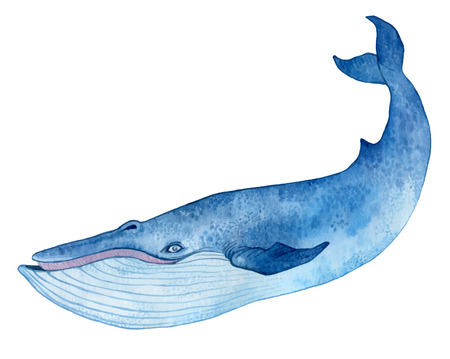 Illustration for blue whale - watercolor hand drawing vector paint - Royalty Free Image