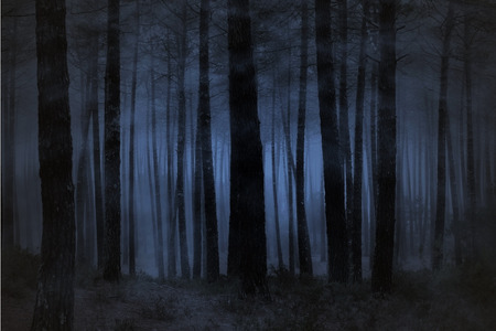 Photo for Spooky foggy forest at night - Royalty Free Image