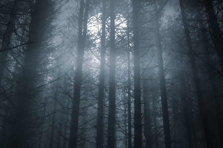 Photo for Spooky foggy forest in a full moon night - Royalty Free Image