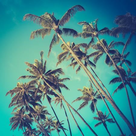 Photo pour Retro Vintage Style Photo Of Diagonal Palm Trees In Hawaii - image libre de droit
