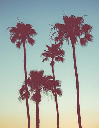 Foto de Retro Style Image Of Palm Trees At Sunset - Imagen libre de derechos