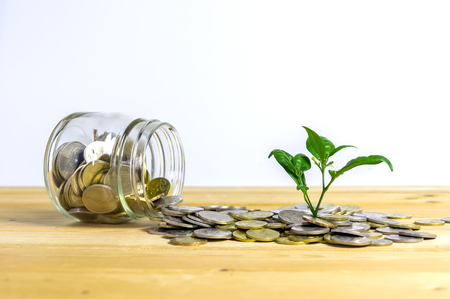 Photo pour Money growing concept,Business success concept, Green environment investment concept.Trees growing on pile of coins isolated on white background. Malaysia coins. - image libre de droit