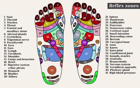 Ilustración de Acupuncture points on the feet. The reflex zones on the feet. Acupuncture. Chinese medicine. - Imagen libre de derechos