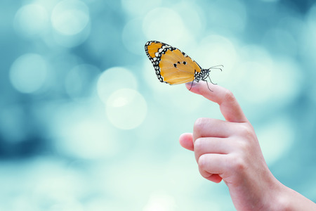 Foto de Beautiful butterfly sitting on the hand - Imagen libre de derechos