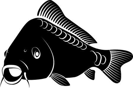 Photo pour isolated carp fish - clip art illustration  - image libre de droit