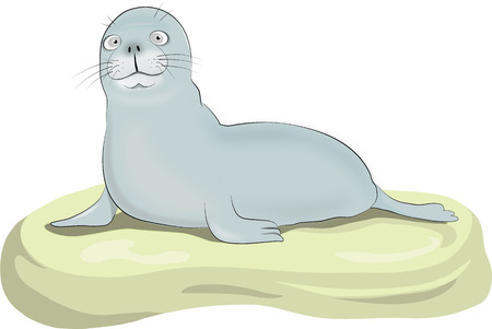 Illustrazione per Vector illustration of a seal on a rock - Immagini Royalty Free