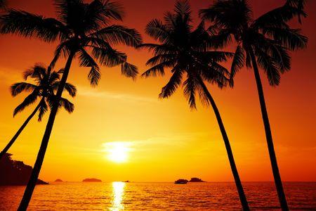 Photo pour Palm trees silhouette at sunset, Chang island, Thailand  - image libre de droit