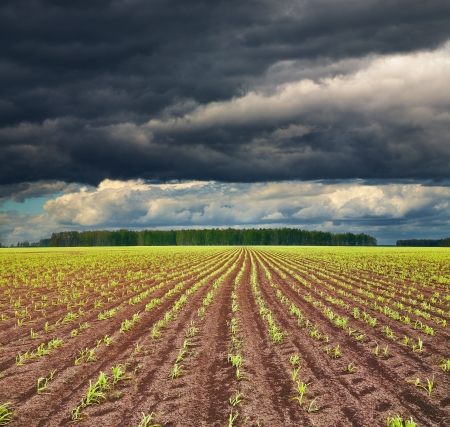 Photo pour View of field with sprouting crops and storm clouds  - image libre de droit