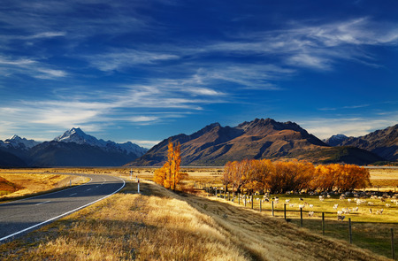 Photo pour Farmland with grazing sheep and Mount Cook on background, Canterbury, New Zealand - image libre de droit