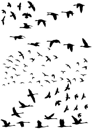 Illustration pour Stock illustration of a flock of birds flying - image libre de droit