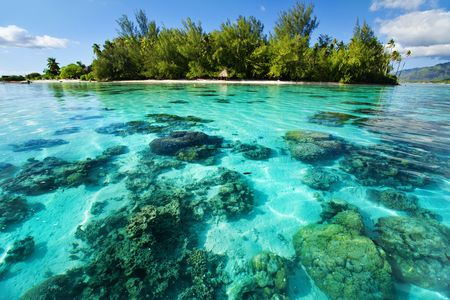 Photo for Underwater coral reef next to green tropical island - Royalty Free Image
