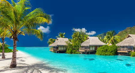 Foto de Perfect holiday location on a tropical island with palm trees and amazing vibrant beach - Imagen libre de derechos