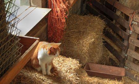 A cat in a farmhouse