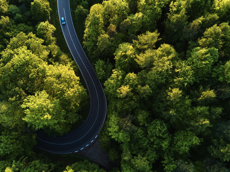 Photo for street between large trees from top with drone aerial view, landscape - Royalty Free Image