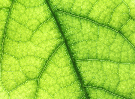 Photo for The leaf close up. Abstract background. - Royalty Free Image