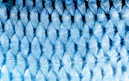 Photo for The fish scale close up. - Royalty Free Image