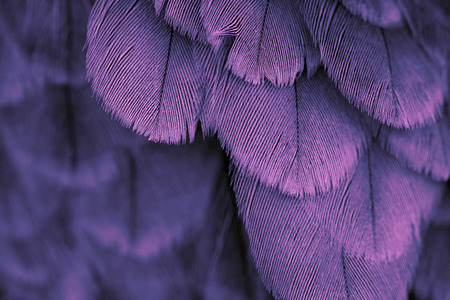 Foto de plumage background of bird close up - Imagen libre de derechos