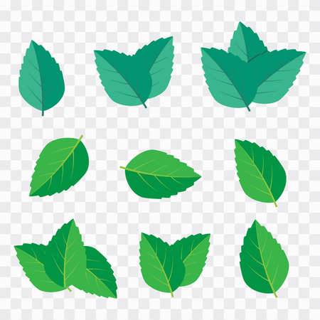 Ilustración de Green tea, mint or tree leaf nature. Mint leaf vector illustration - Imagen libre de derechos