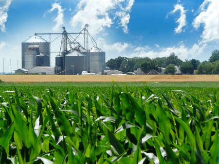 Foto per Lush, green corn field with grain bins in the distance - Immagine Royalty Free